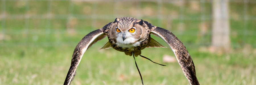 Five Day Falconry Course