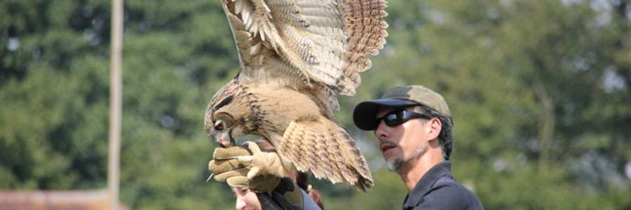 Bird of Prey Experiences