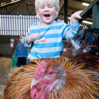 Meet the animals in the Children's Barn